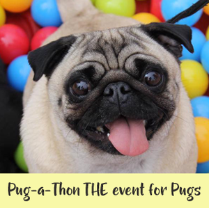 When is Pug-a-Thon? South East's Must attend event for Pug's!
