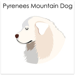 Pyrenees Mountain Dog
