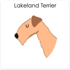 Lakeland/Fox/Irish/ Welsh Terrier