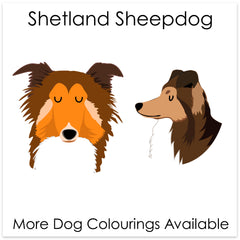 Shetland Sheepdog/ Rough Collie