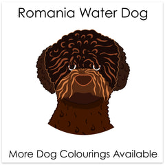 Romania Water Dog