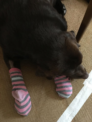 Dog with Socks on