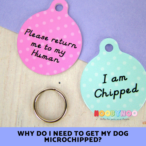Hoobynoo Dog tags. Why do I need to get my dog microchipped?