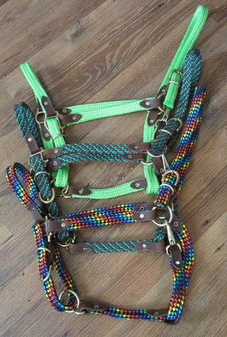 rainbow horse head collar