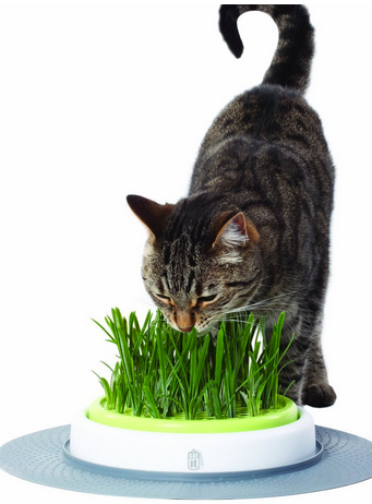 catnip garden, cat toys, christmas gifts for cats