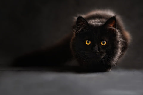 black cat sitting in the dark