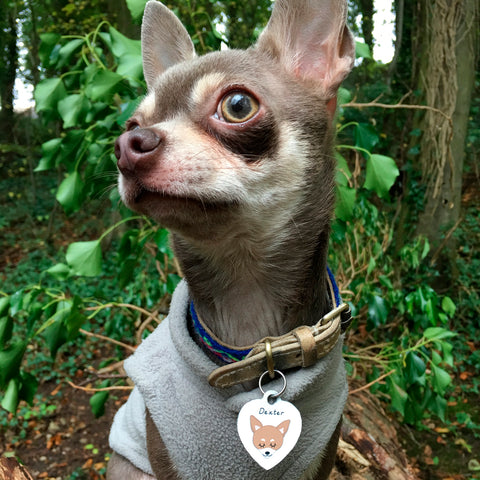Chihuahua Dog Breed Information and Pet Id Tag for Dogs at Hoobynoo Pets