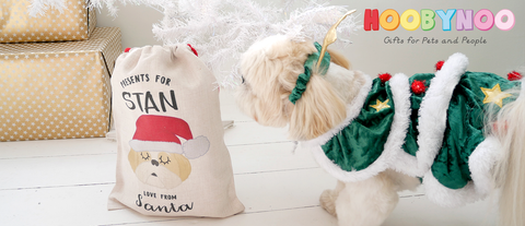 shih tzu puppy investigating christmas sack