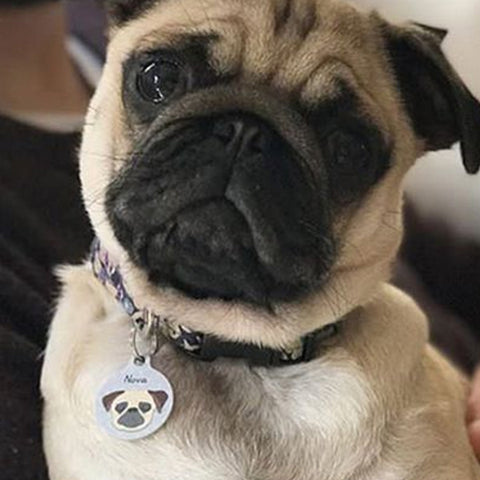 Pug Dog Breed Information Hoobynoo World Dogs Pet Tags and ID Tag
