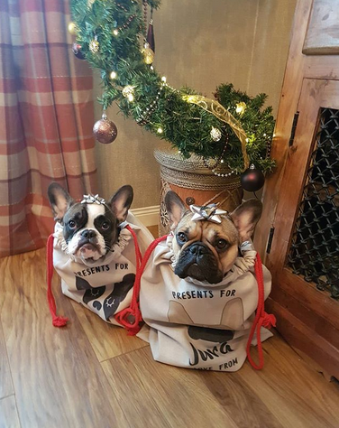 Two Frenchies Sitting in Hoobynoo Christmas Sacks under a tree