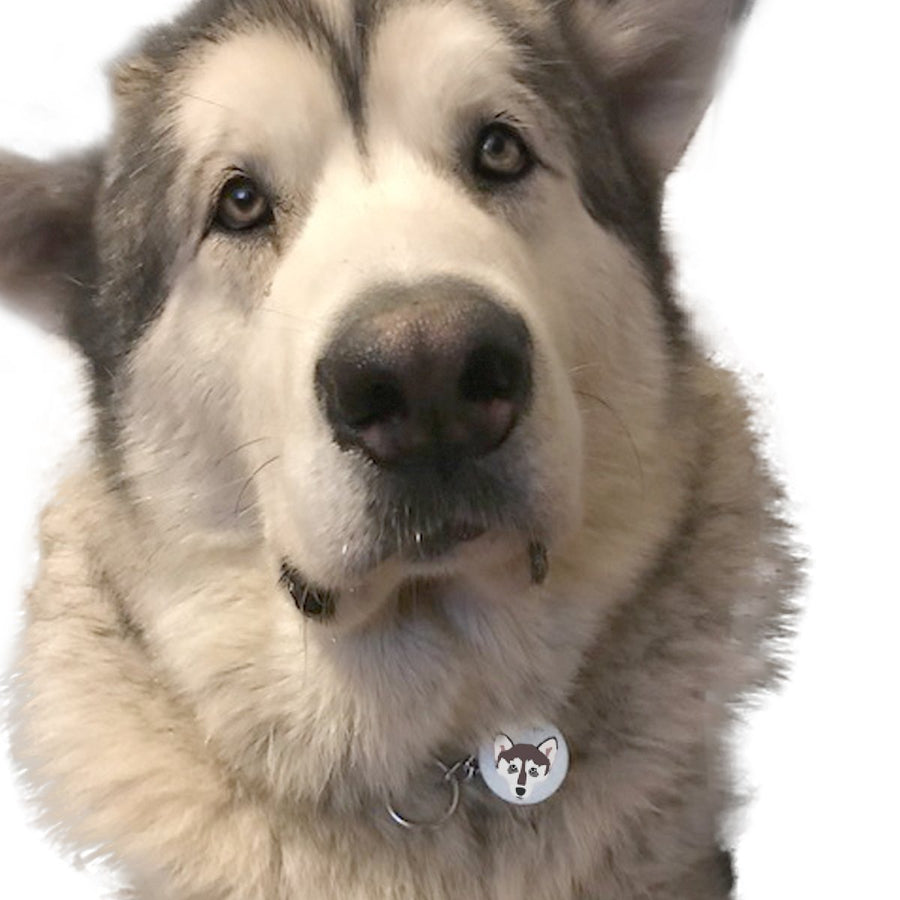 Alaskan Malamute Personalised Dog ID Tag  - Hoobynoo - Personalised Pet Tags and Gifts
