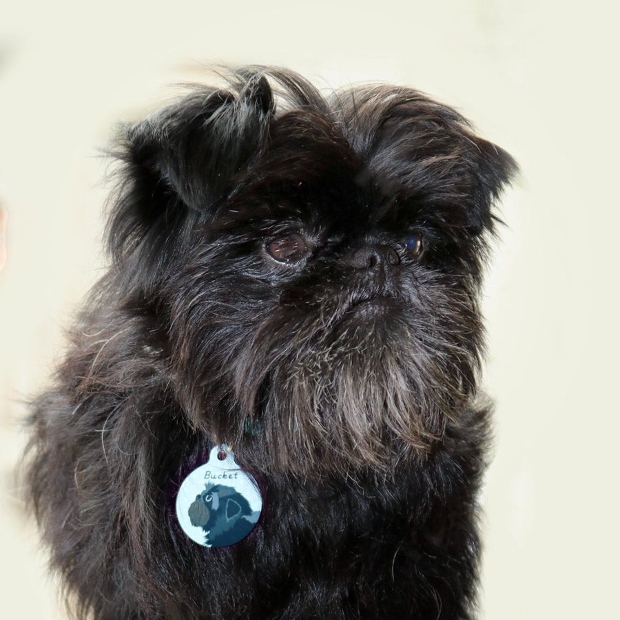 Affenpinscher Personalised Dog ID Tag  - Hoobynoo - Personalised Pet Tags and Gifts