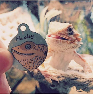 Bearded Dragon Harness ID Tag  - Hoobynoo - Personalised Pet Tags and Gifts