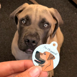 Boerboel Personalised name ID Tag - White