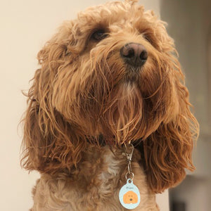 Cockapoo Personalised Dog ID Tag  - Hoobynoo - Personalised Pet Tags and Gifts