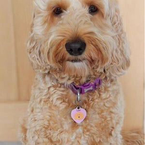 Bichon Frise Dog ID Tag -HEART  - Hoobynoo - Personalised Pet Tags and Gifts