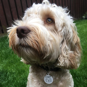 Cockapoo Personalised Dog ID Tag on White Background  - Hoobynoo - Personalised Pet Tags and Gifts