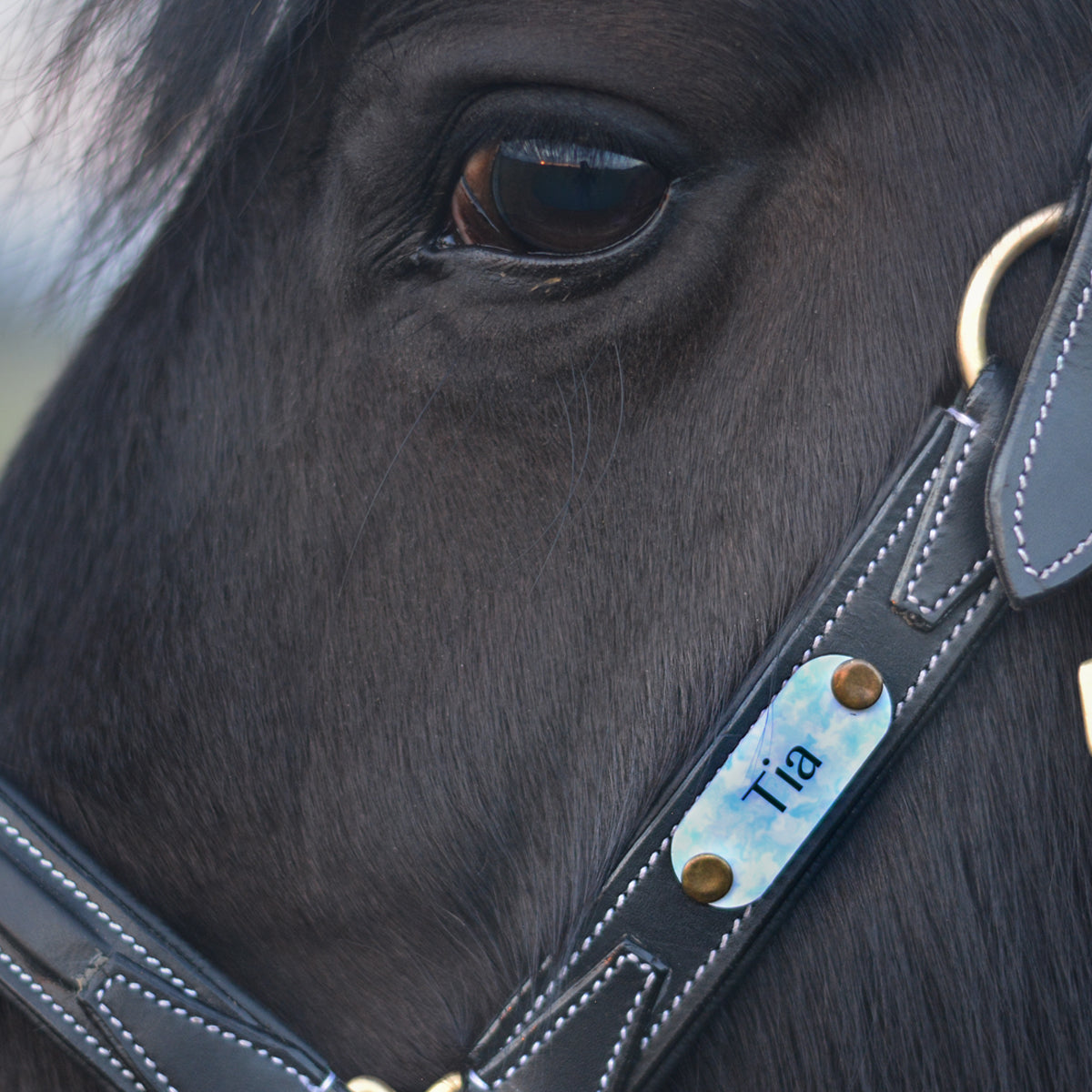 Horse Bridle Tag