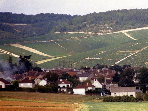 Vineyards in Champagne, France