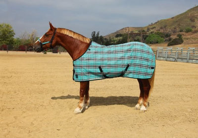 Kensington Traditional Fit Fly Sheet - 2013 - RM Tack & Apparel