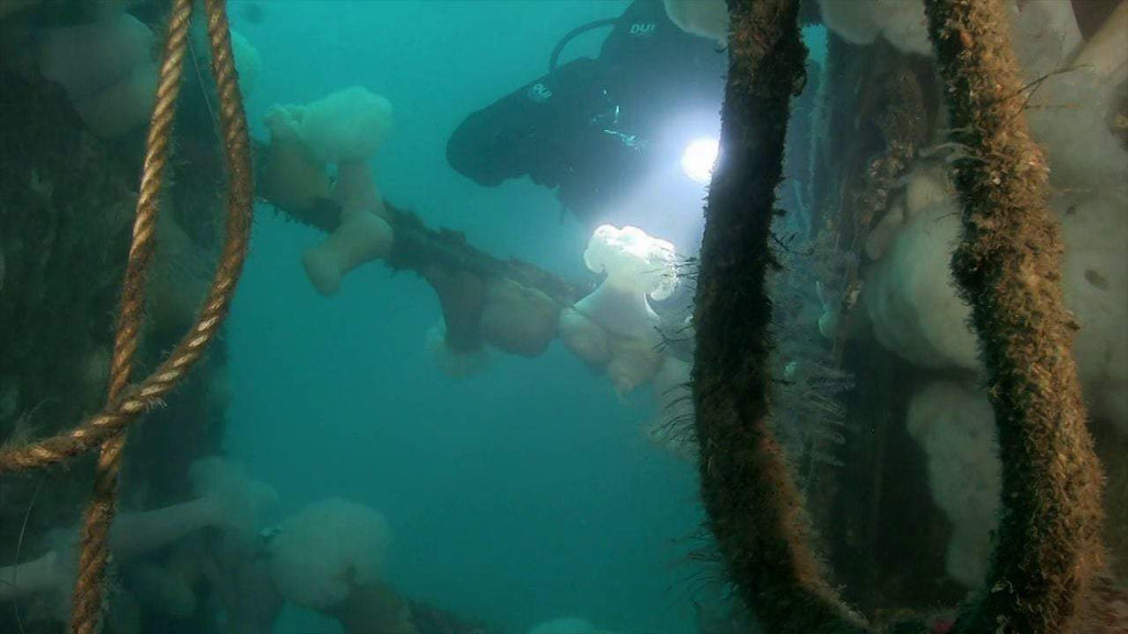 Diver on the ACE Wreck in Dana Point California