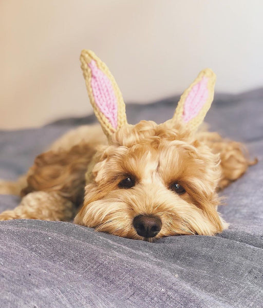 Dog Ear Warmer, Bunny