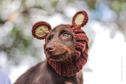 Dog Ear Warmer, Bear