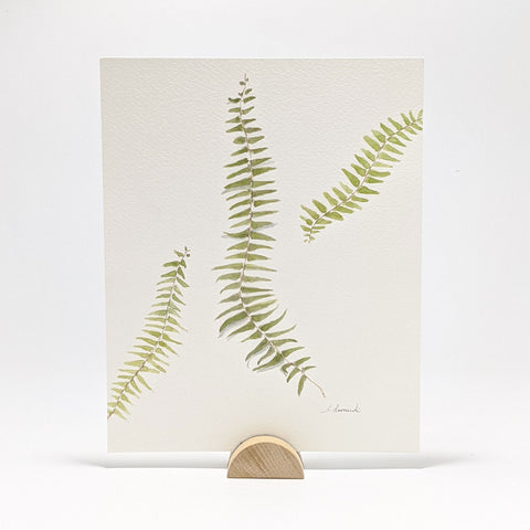 Ferns, Original Watercolor