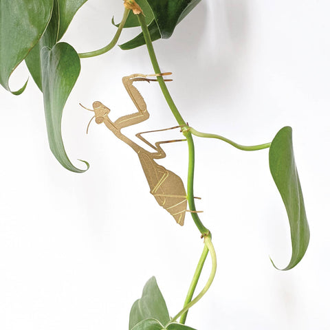 Plant Animal, Praying Mantis
