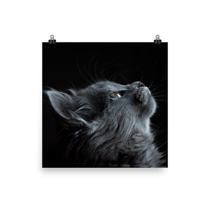 Night cat print