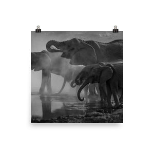 Black and white elephants print