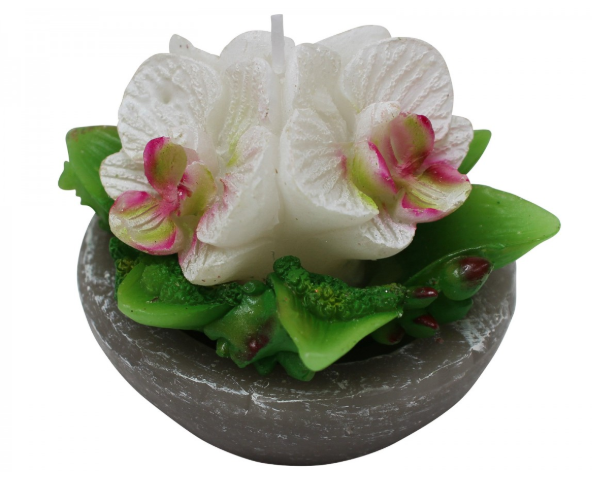 Candle Orchid Pot Dish