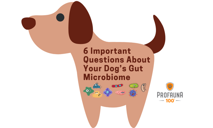6 Important Questions about Your Dog's Gut Microbiome