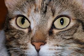 Cat Sniffles - What To Do If Your Cat or Kitten Has The Sniffles...