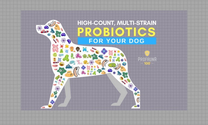 A High-Count, Multi-Strain Probiotic for Dogs & Cats