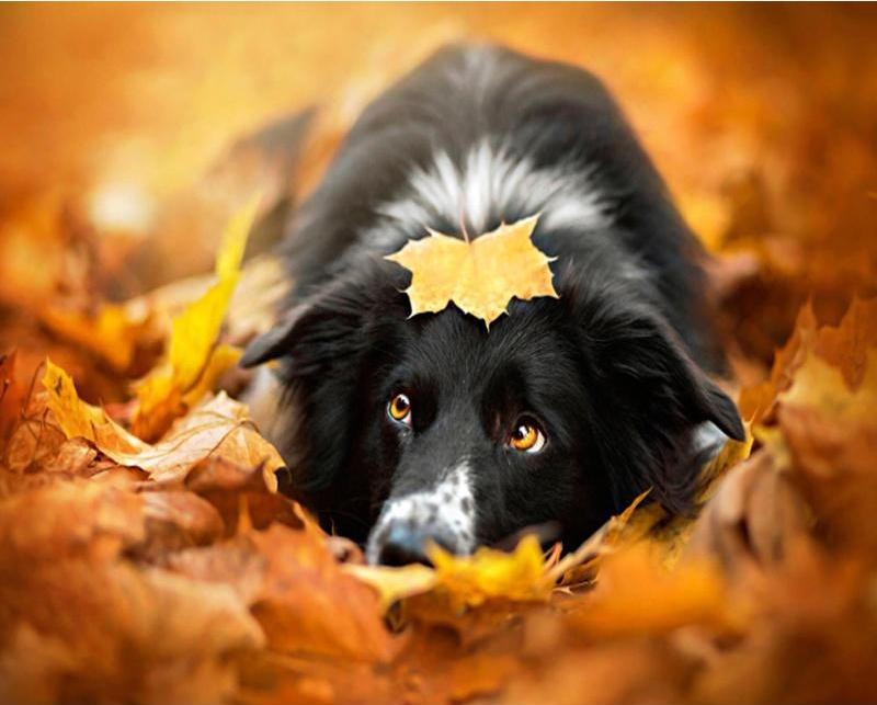 Dog playing in Autumn