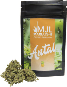 Marijlight Antal Erba light legale marijuana easyjoint canapa sativa easyjoint