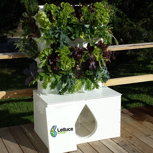 Lettuce Evolve 360 Plant Aquaponic System, Commercial Wall