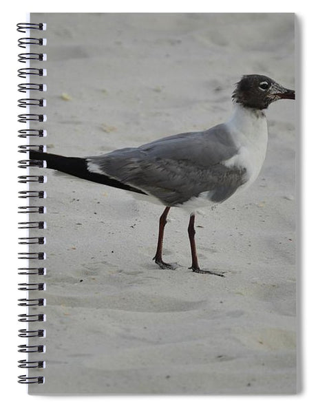 Mr. Sea Bird - Spiral Notebook