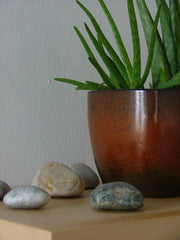 Aloe plant with rocks next to its base.