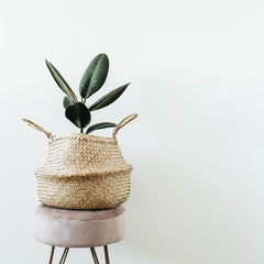 Rubber plant in a wicker basket sitting on a stool against a plain wall.
