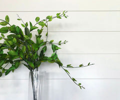 White shiplap walls with a green plant in front in a glass vase.
