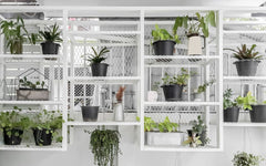 A wall of various house plants hanging on a white metal shelving unit
