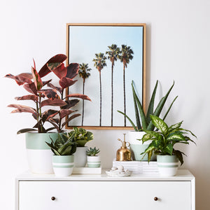 Potted houseplants shipped right to your door.