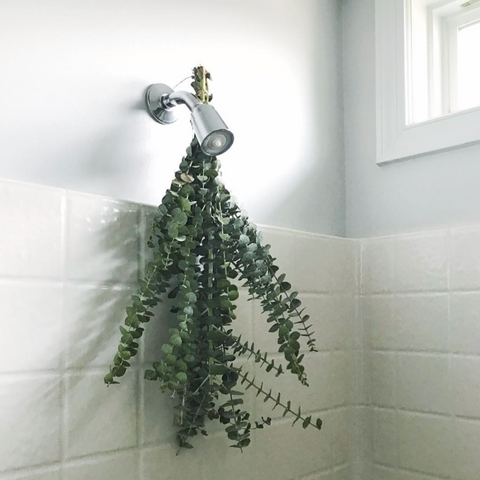 Relieve irritated sinuses naturally at home by simply hanging fresh or dried eucalyptus leaves in your shower! A tip brought to you by Belle & Beast Organics
