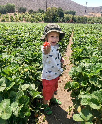 strawberry, strawberry picking, toddler with hat, toddler berry picking, underwood family farm, raspberry picking, farm, summer 2021