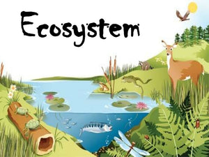 The World of Ecosystem