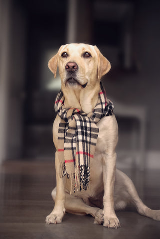 Labrador Lab Tested Pet Products