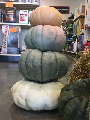 Heirloom Pumpkins by the pound
