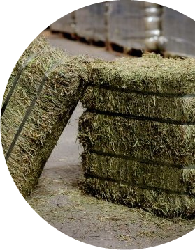Semican International Alfalfa Compressed Hay Bales